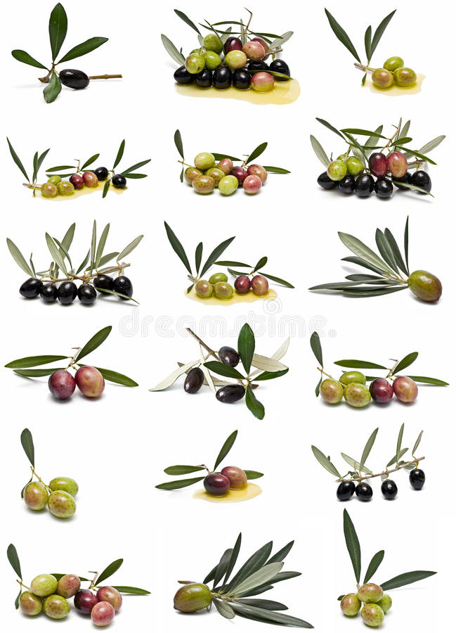 Ramassage d'olives. images stock