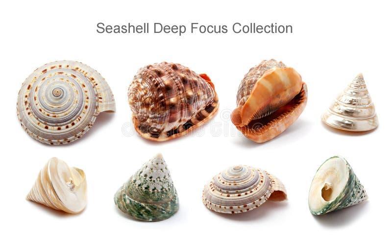 Ramassage d'orientation profonde de Seashell image stock