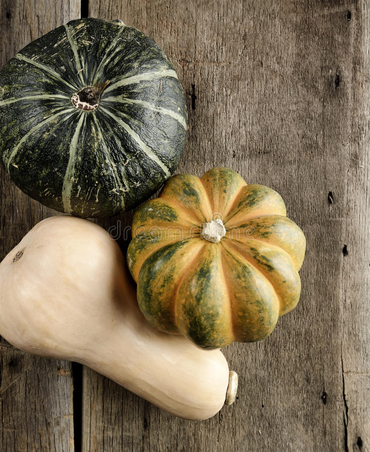 Ramassage de courge photos stock
