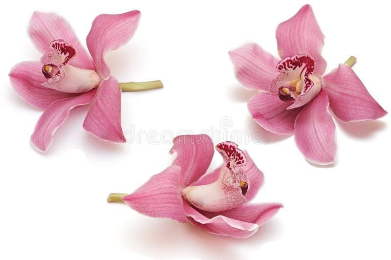 Ramassage de fleur d'orchidée image libre de droits