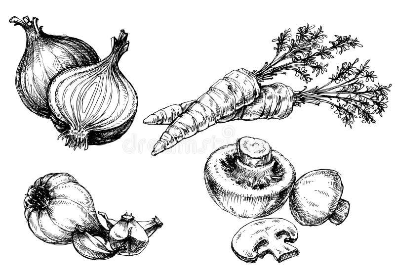 Ramassage de légumes illustration de vecteur