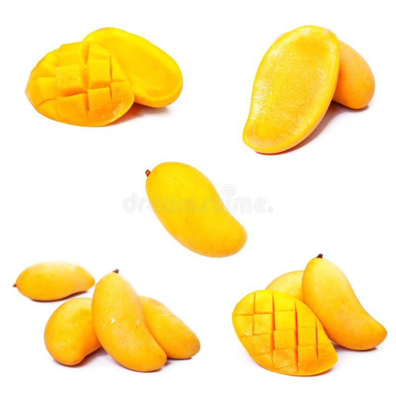 Ramassage de mangue image stock