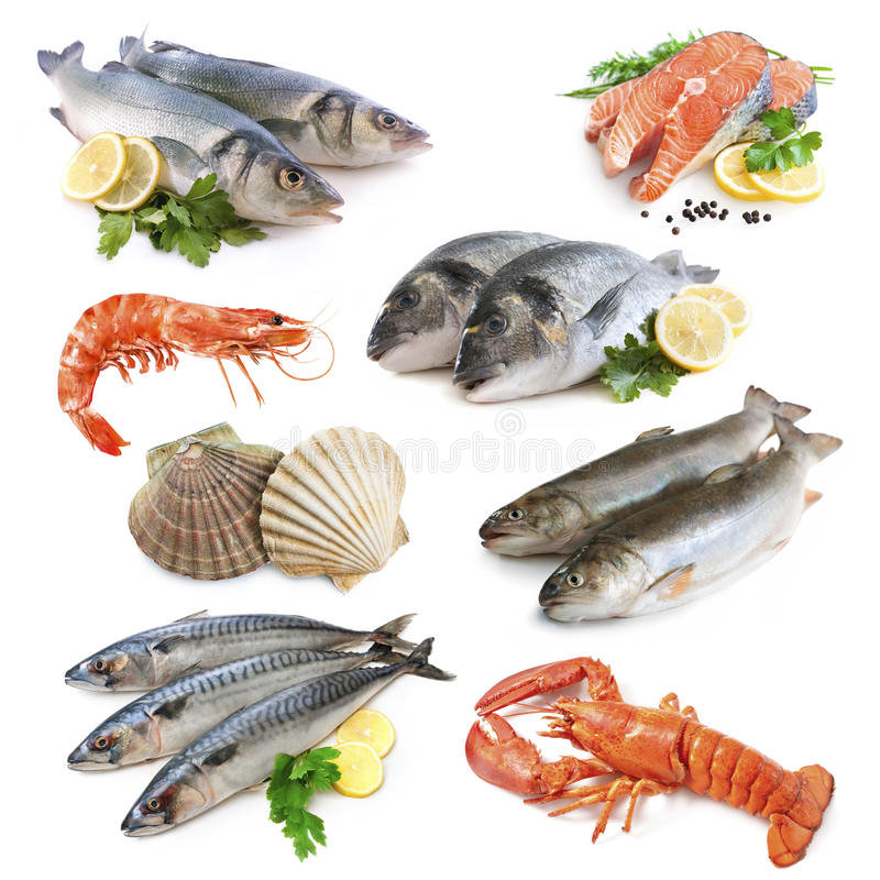 Ramassage de poissons photos libres de droits