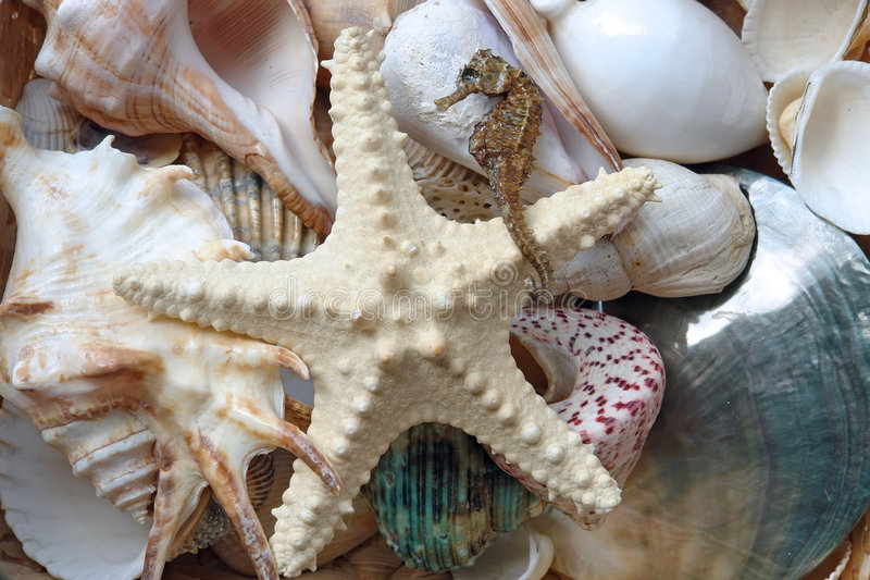 Ramassage de Seashell photographie stock