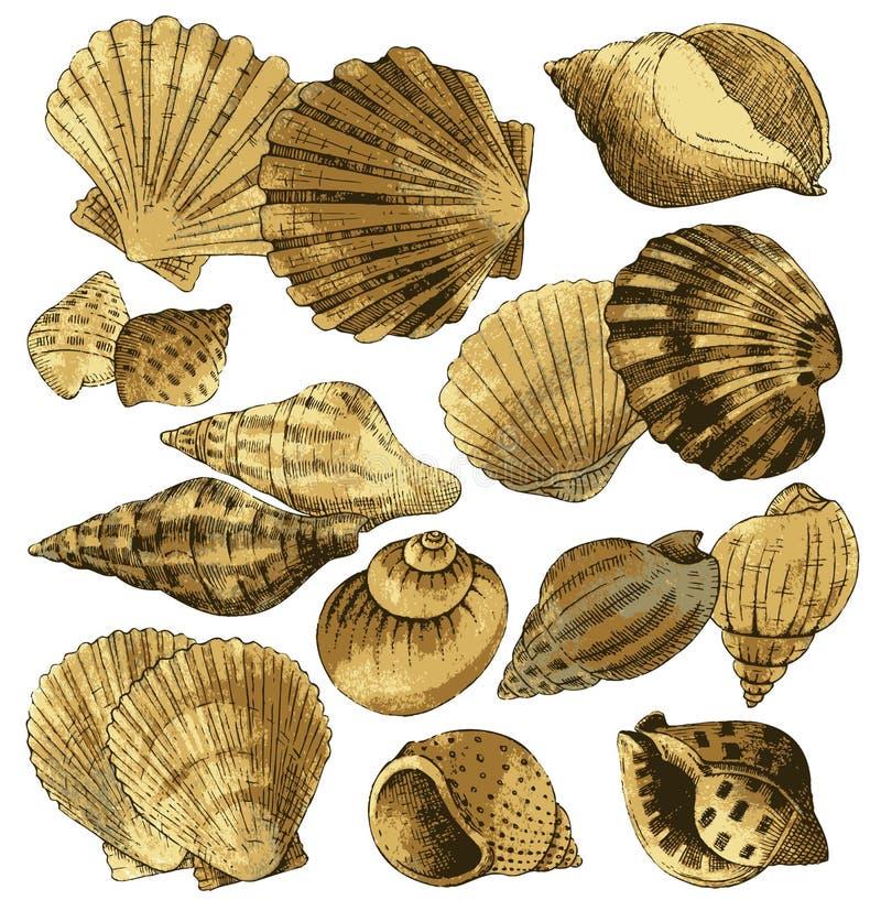 Ramassage de Seashell illustration libre de droits