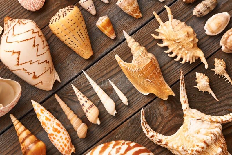 Ramassage de Seashell photographie stock libre de droits