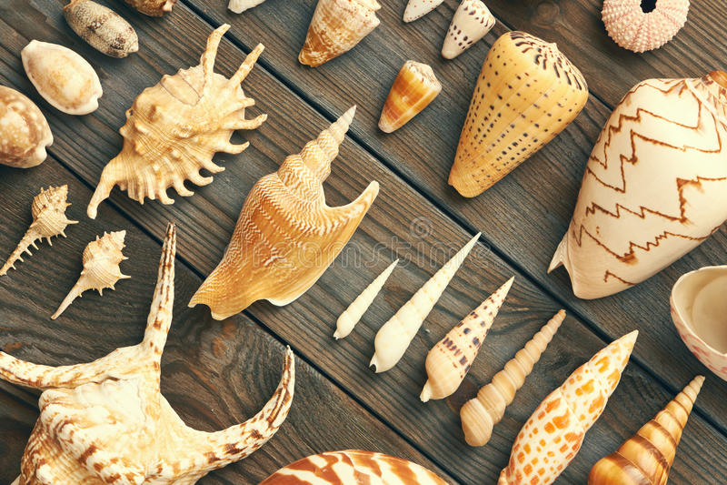 Ramassage de Seashell photos stock