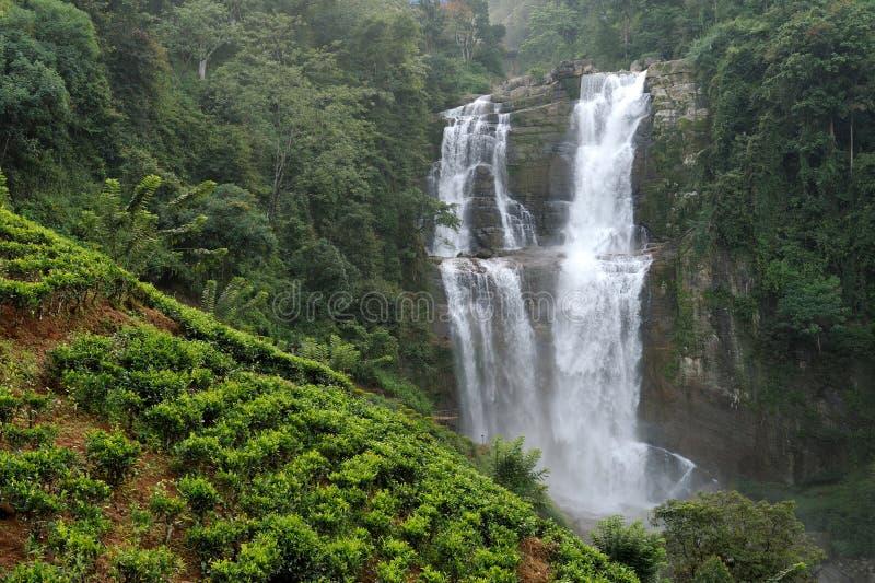 Ramboda понижается в Шри-Ланку стоковые изображения rf