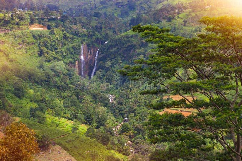 Rambodadalingen Sri Lanka stock foto