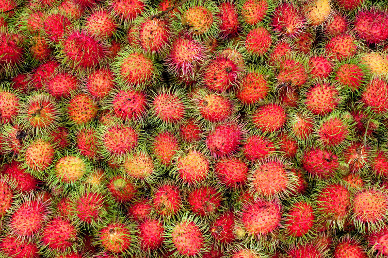 Rambutan. Group of red rambutan ,Thai fruit stock image