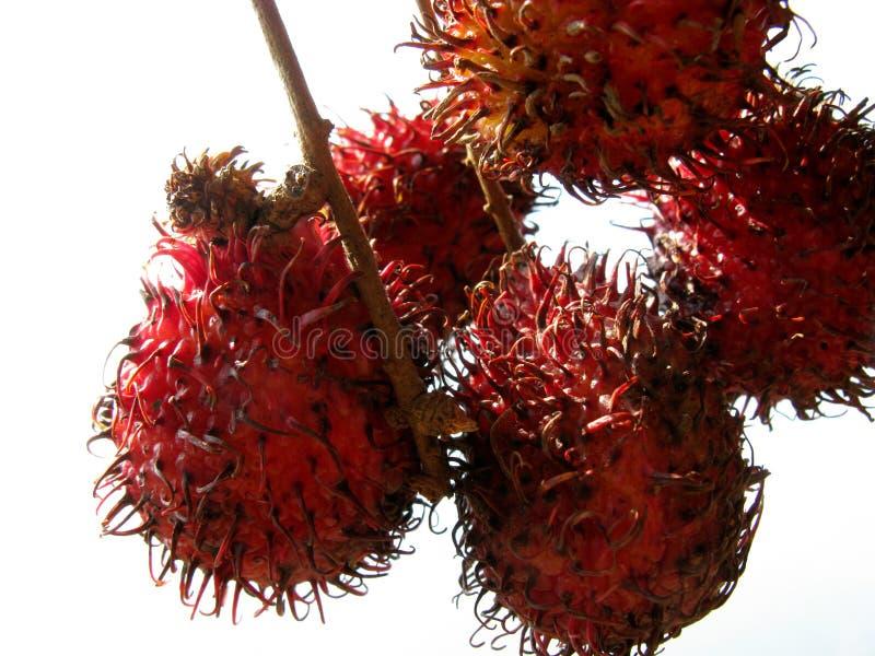 Rambutan imagen de archivo libre de regalías