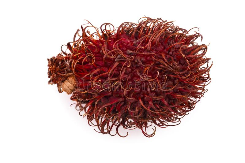 Rambutan getrennt auf weißem Hintergrund Tropische Frucht Nephelium lappaceum Beschneidungspfad eingeschlossen Flache Lage stockfoto
