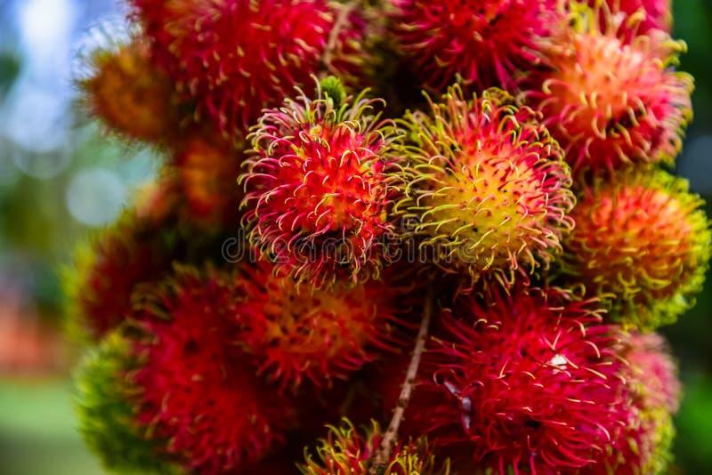Rambutan van Thailand stock afbeeldingen