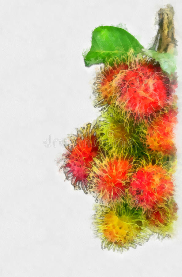 Rambutan water color royalty free stock photo