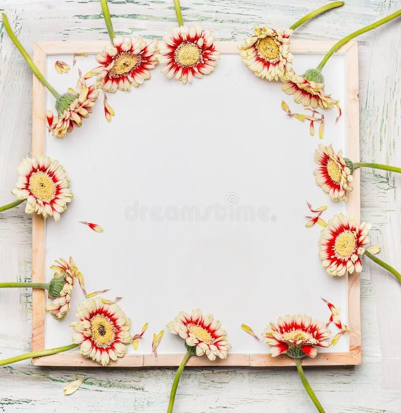 Ramen av den nätta gerberaen blommar på tom vit svart tavlabakgrund arkivbild