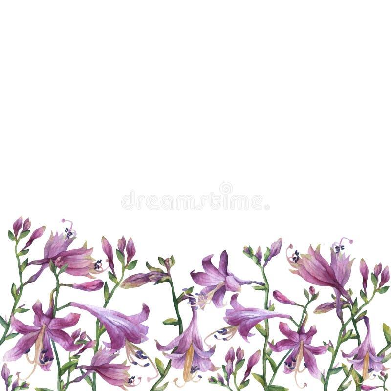Ramen av filialerna med den purpurfärgade hostablomman liljar Hostaventricosaminderårig, asparagaceaefamilj fotografering för bildbyråer