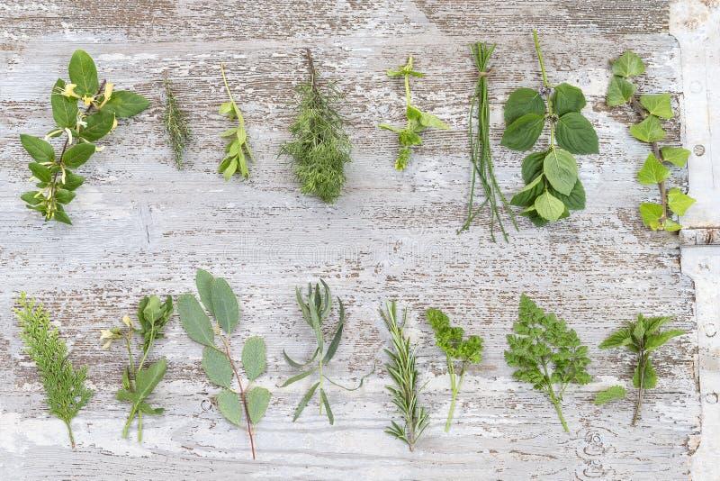 Ramen av gröna nya örter blandar på gammal vit träbakgrund, bästa sikt arkivfoto