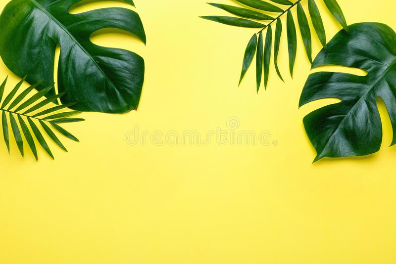 Ramen av tropiska sidor Monstera och gömma i handflatan på gul bakgrund ett utrymme för text Bästa sikt, lekmanna- lägenhet, fotografering för bildbyråer