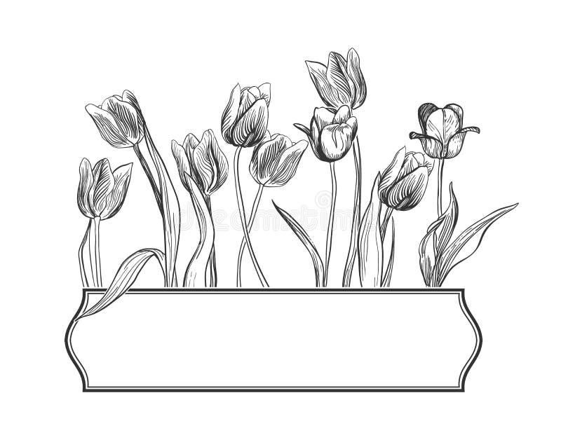 Ramen för blommavektorkortet inristade eleganta tulpan vektor illustrationer