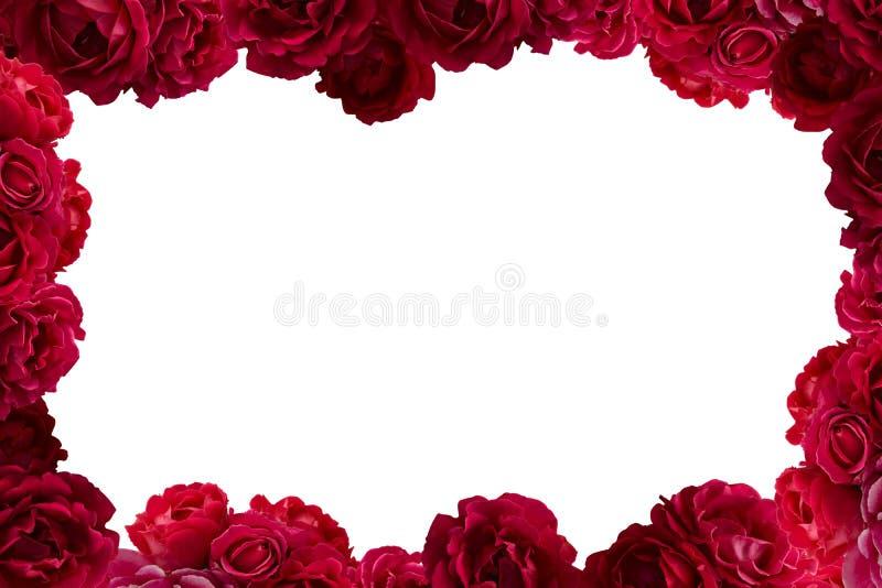 Ramen med busken av den röda rosen blommar isolerad bakgrund fotografering för bildbyråer