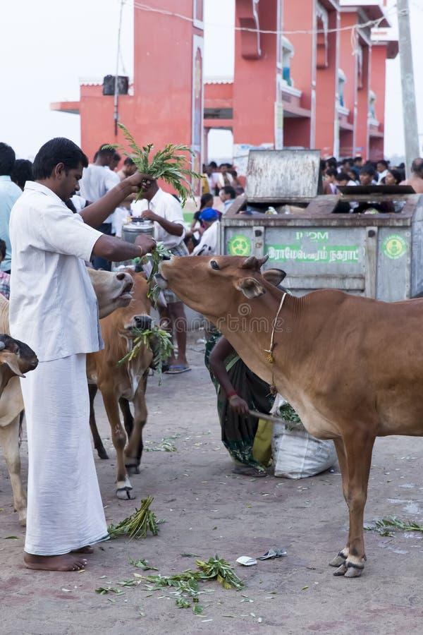 Rameswaram, India - May 25, 2014. Rameswaram, Tamil Nadu, India - May 25, 2014. Full report about Rameswaram pilgrimage, religion. Religious city rituals. Life royalty free stock images