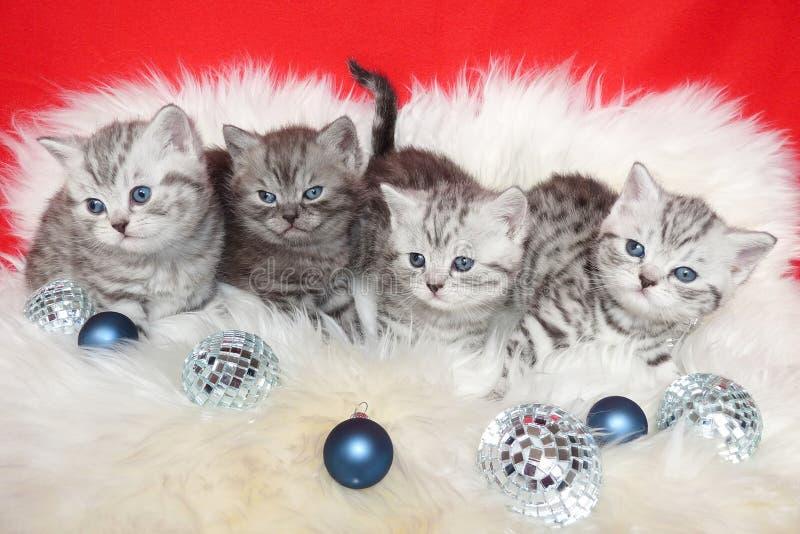 Ramez les jeunes chats tigrés sur la peau de moutons avec des boules de Noël image stock
