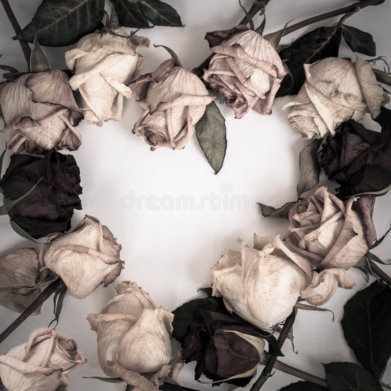 Ramhjärta från torra rosor arkivbilder