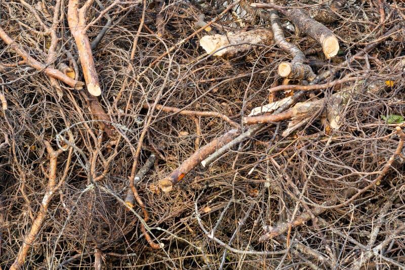 Rami degli alberi impilati in un mucchio, fondo, struttura fotografia stock