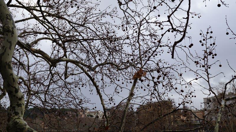 Rami degli alberi nella priorità alta immagine stock