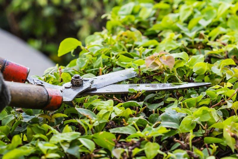 Rami del taglio dei giardinieri immagini stock libere da diritti