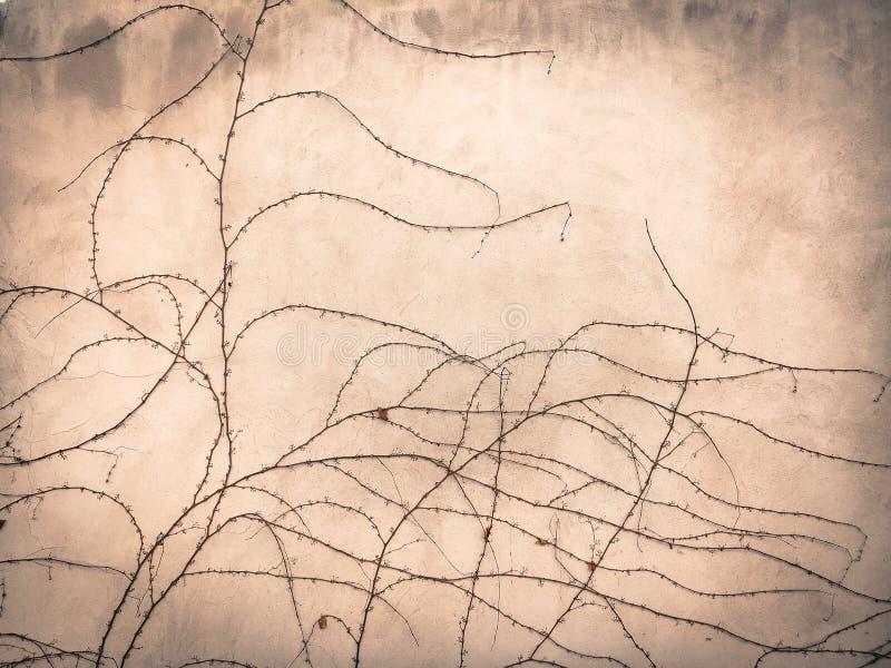 Rami dell'uva selvaggia di autunno tessuta sulla parete immagini stock libere da diritti