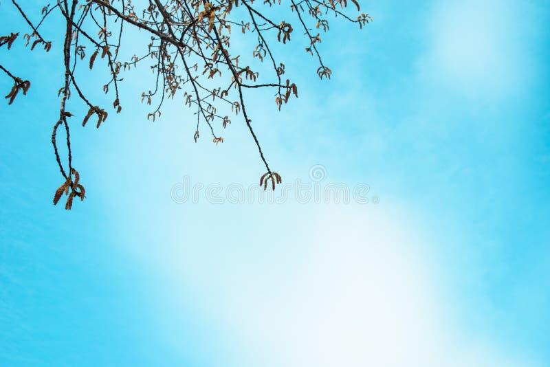 Rami della betulla contro il cielo blu fotografie stock libere da diritti