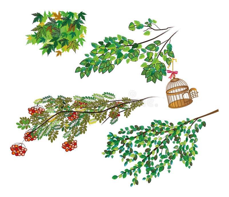 Rami della cenere di montagna differente degli alberi, acero, tremula con una gabbia per uccelli aperta illustrazione di stock