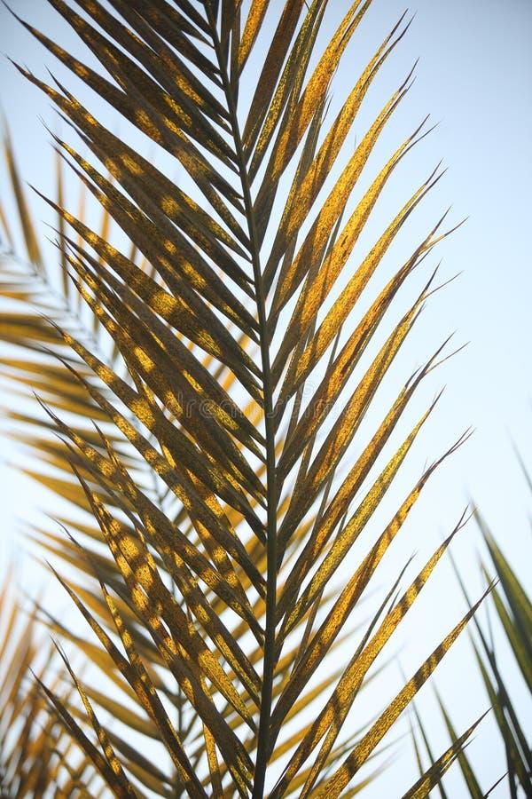 Rami della palma fotografia stock