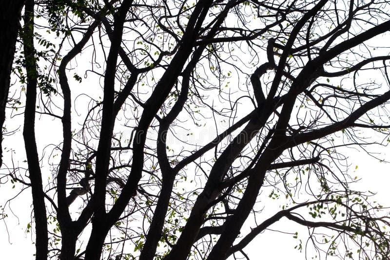 Rami di albero astratti isolati fotografie stock