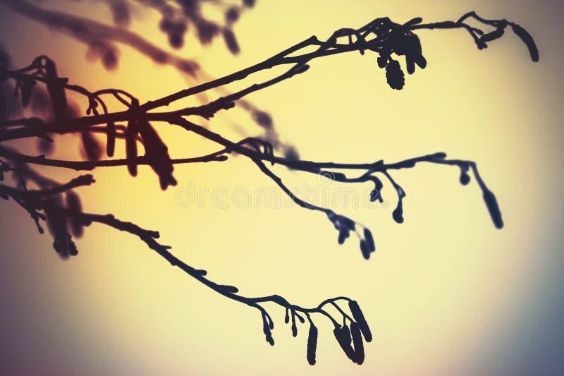 Rami di albero dell'ontano, annata variopinta fotografie stock libere da diritti