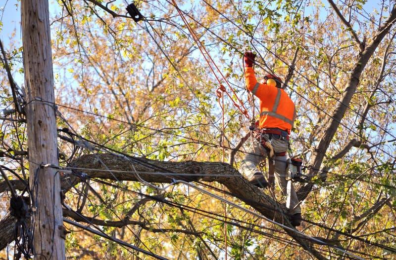 Rami di albero della potatura dell'arboricoltore immagine stock