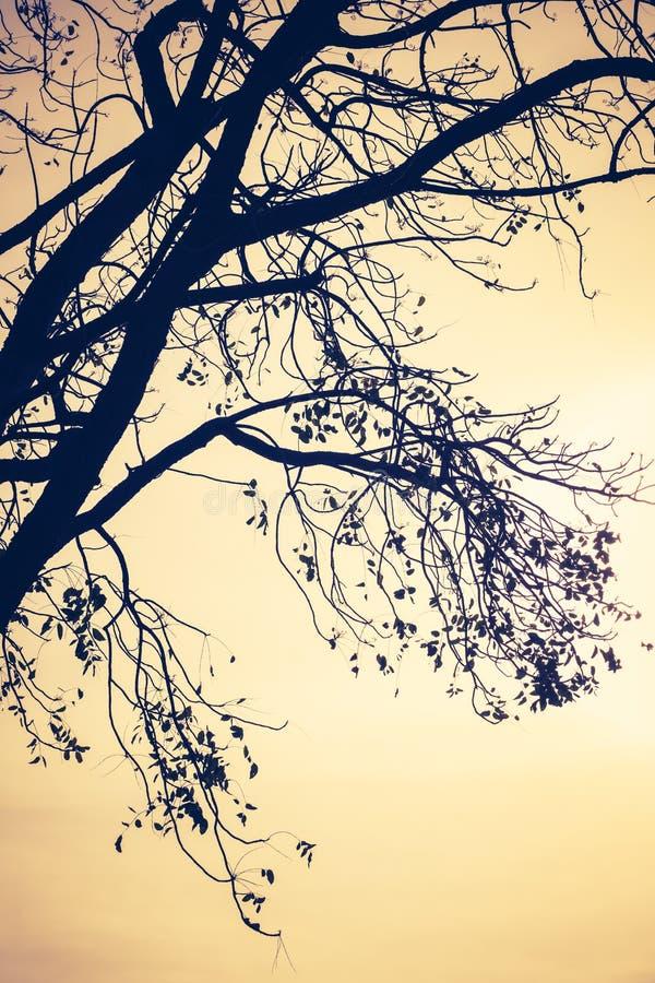 Rami di albero della siluetta fotografia stock libera da diritti