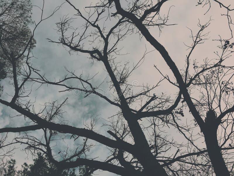 Rami di albero drammatici sopra un cielo scuro immagini stock