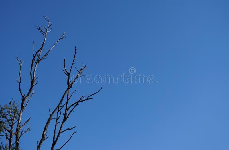 Rami di albero isolati sopra cielo blu fotografie stock libere da diritti