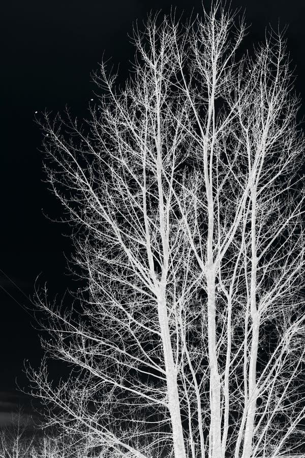 Rami di albero isolati su fondo nero immagini stock libere da diritti