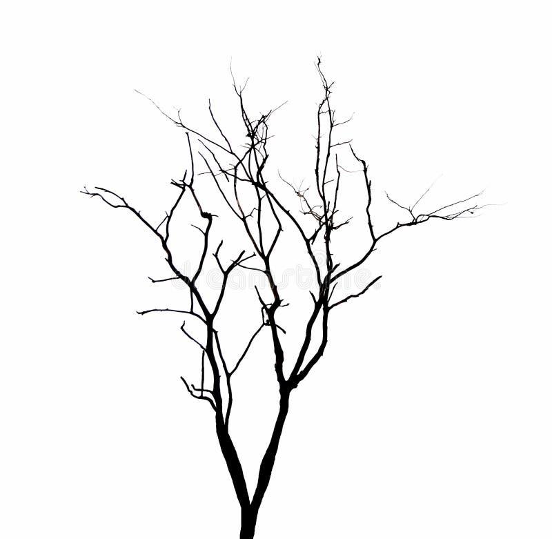 Rami di albero morti isolati fotografie stock