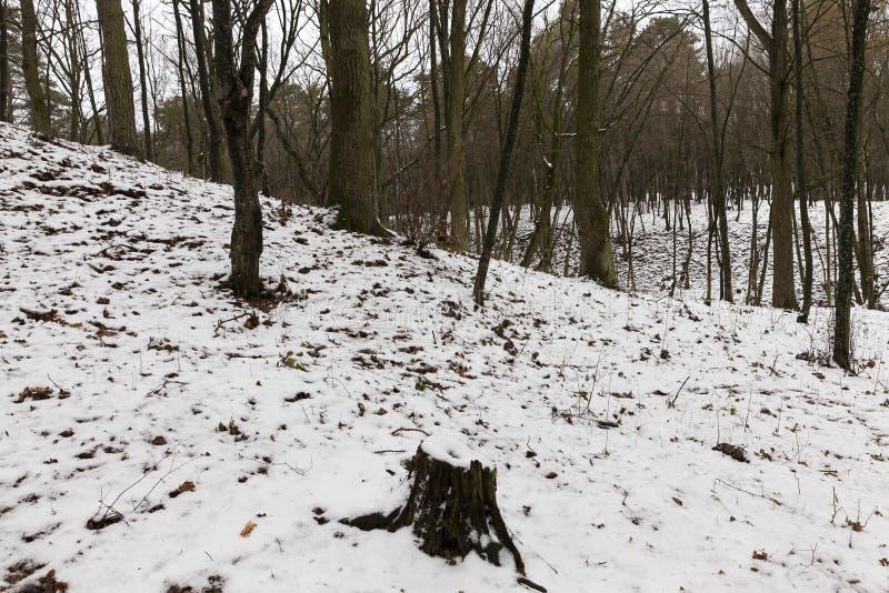 Rami di albero nella neve fotografia stock
