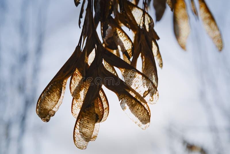 Rami di albero nudi in molla in anticipo contro un cielo immagini stock libere da diritti