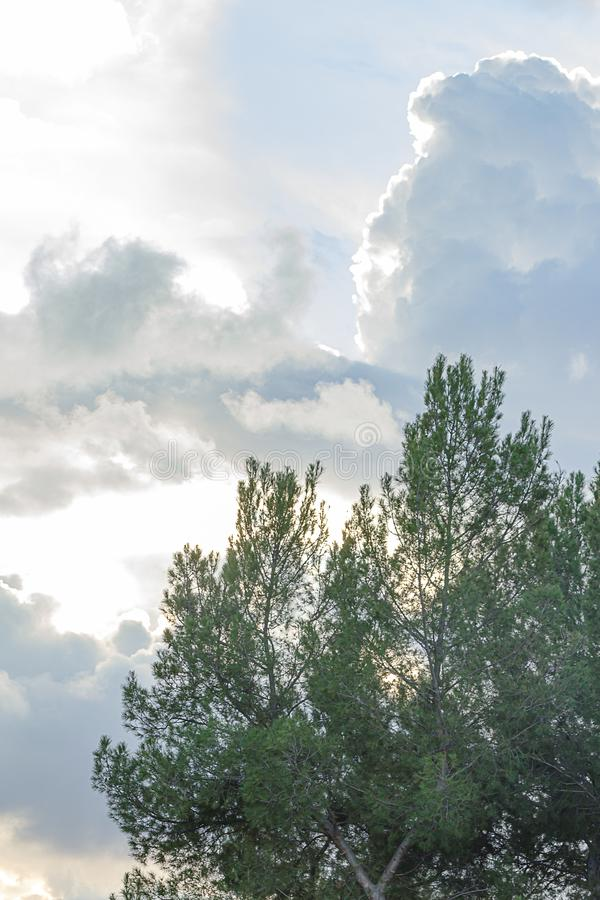 Rami di albero sempreverdi contro epanse enorme del cielo con le nuvole di nimbus del cumulo fotografia stock libera da diritti