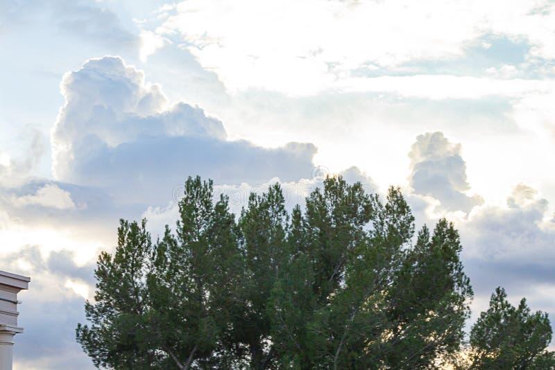 Rami di albero sempreverdi contro epanse enorme del cielo con le nuvole di nimbus del cumulo immagini stock