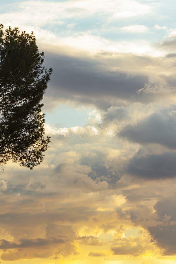 Rami di albero sempreverdi in siluetta contro cloudscape espansivo al tramonto immagini stock