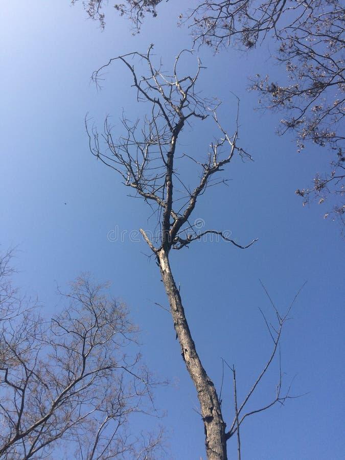 Rami di albero sfrondati, tempo nuvoloso fotografie stock libere da diritti