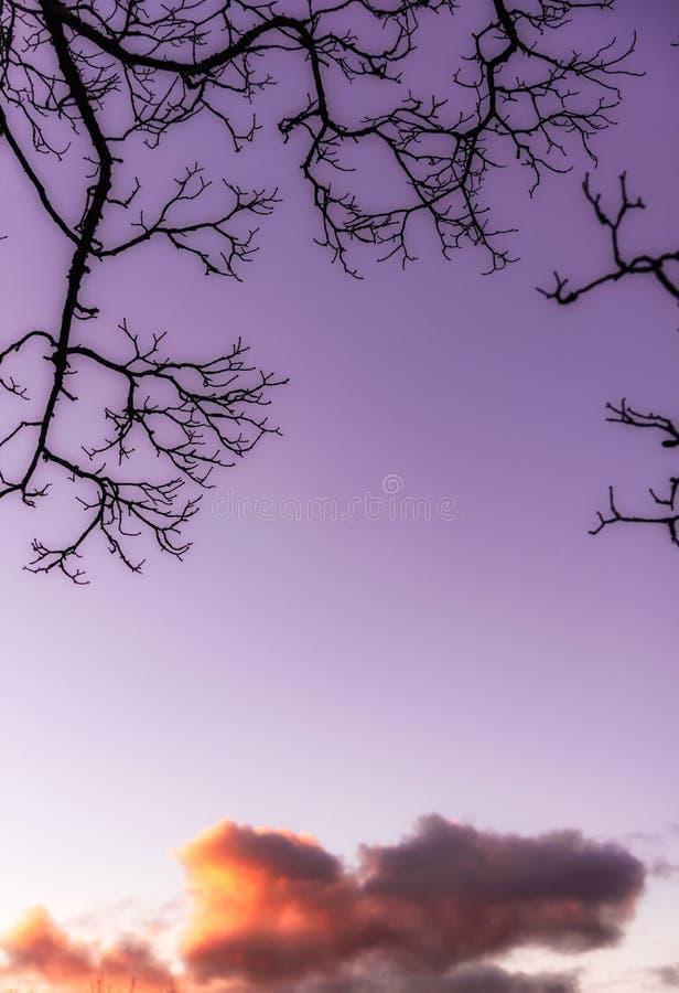 Rami di albero di tramonto di Cloudscape fotografie stock libere da diritti