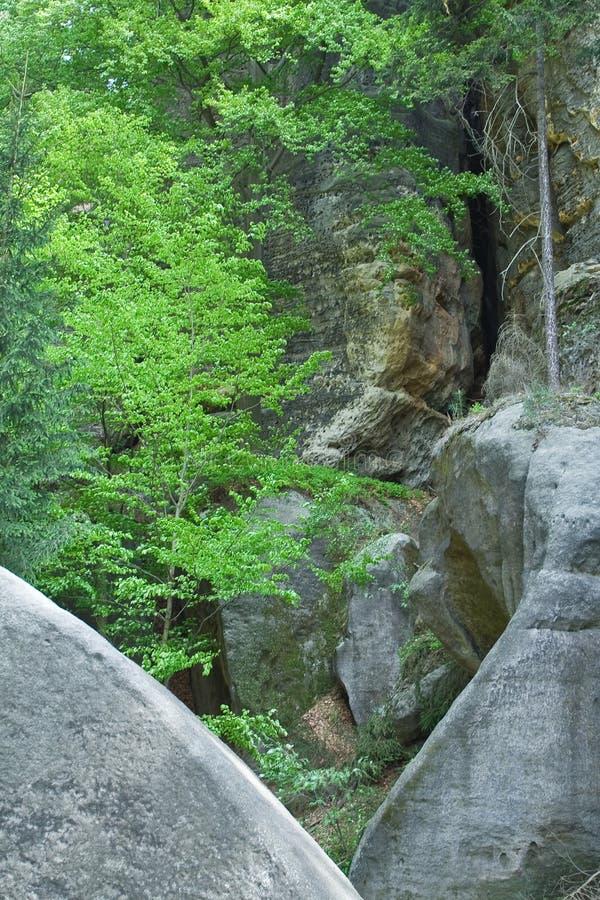 Rami di albero verdi che appendono sulla montagna fotografia stock